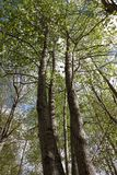 Pyrenean forest in spring, Aude Stock Photos
