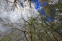 Pyrenean forest in spring, Aude Stock Photography