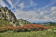 Pyrenean landscape in spring, Aude, France Royalty Free Stock Images