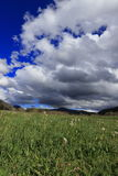 Pyrenean meadow and dandelions in spring, Aude in France Royalty Free Stock Photography