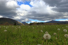Pyrenean meadow and dandelions in spring, Aude in France Stock Photos