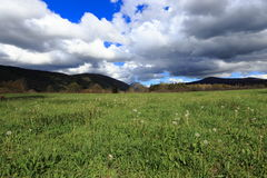 Pyrenean meadow in spring, Aude in France Stock Photography