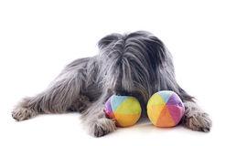 Pyrenean sheepdog ans toys Royalty Free Stock Images