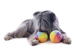 Pyrenean sheepdog ans zabawki obrazy royalty free