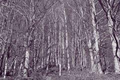 Pyrenean skog i Aude Royaltyfria Bilder