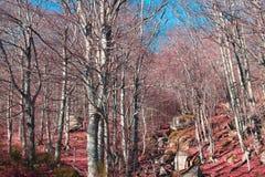 Pyrenean skog i Aude Arkivbild