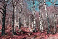 Pyrenean skog i Aude Arkivfoton