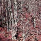 Pyrenean skog i Aude Arkivbilder