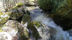 Pyrenean stream in  Aude, France stock video footage