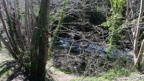 Pyrenean stream and forest in  Aude, France stock footage