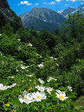 Pyrenees Royalty Free Stock Photography