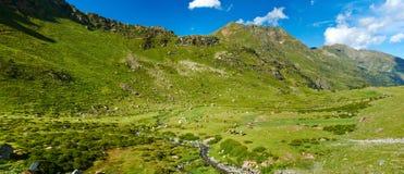pyrenees andy стоковые изображения rf