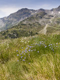 Pyrenees in July. Landscape of the Pyrenees in Andorra Stock Images