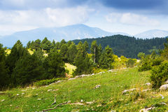 Pyrenees mountains with pine trees Stock Image