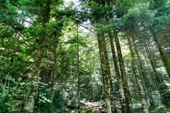 Pyrenees trees forest mountain summer scenics Royalty Free Stock Photography