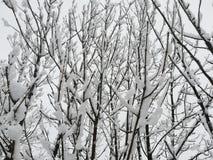 Pyrenes nevado das árvores do inverno Imagem de Stock
