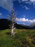 Pyrennes spagna Fotografia Stock