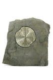 Pyrite sun Stock Photos