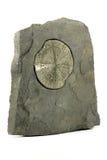 Pyrite sun Stock Image
