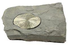 Pyrite sun Stock Photography