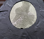Pyrite Sun Crystal Royalty Free Stock Photography