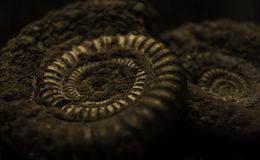 Pyritised-Ammoniten Stockbild