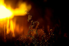 pyromania Photo stock