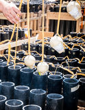 Pyrotechnics Setup Royalty Free Stock Photography