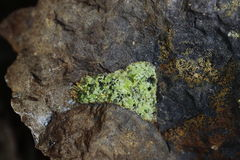 Pyroxene i basalt Arkivfoto