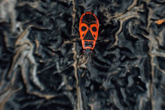 Pyrrhocoris apterus firebug. Royalty Free Stock Photos
