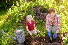 Pys och kvinna som planterar potatisar i trädgården arkivfoto