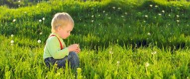 Pys på bakgrund för grönt gräs för vår Royaltyfri Fotografi