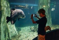 Pys som använder en telefon som tar ett foto av arapaimagigas, också som är bekant som pirarucuen som bor i Amazon River i det un royaltyfri fotografi