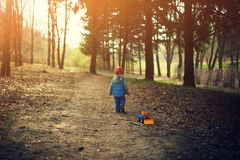 Pys som går i skogen Arkivfoto