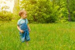 Pys som går på gräset i parkera Royaltyfria Bilder