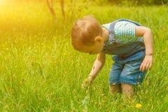 Pys som går på gräset i parkera Royaltyfri Bild