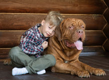 Pys som omfamnar den stora Bordeaux hunden Royaltyfri Foto
