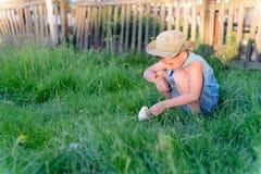 Pys som spelar med en fågelunge på lantgården royaltyfri bild