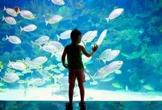 Pys unge som håller ögonen på stimen av fisksimning i oceanarium Arkivbild