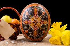 Pysanka, huevos pintados en busket y narcisos de la primavera Huevos de Pascua en fondo negro Concepto del día de fiesta, el gret Imagen de archivo