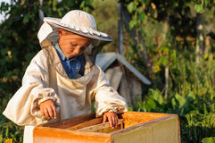 Pysbeekeeperen arbetar på en bikupa på bikupan Arkivbild