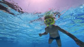 Pysen är vovve-att paddla som är undervattens- arkivfilmer