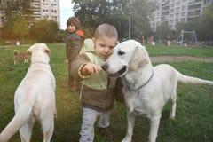 Pysen ger affektion till hans hund arkivbild
