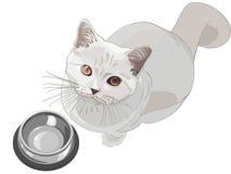 pytać kota je royalty ilustracja