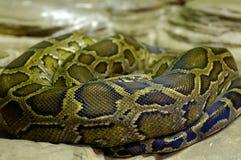 Python Stock Images