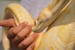 python photo libre de droits