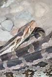 python images stock