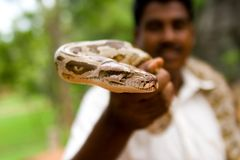 Python. Snake charmer holding in hand a python Stock Photo