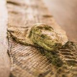 在木桌上和泥沼装饰的Python (蟒蛇,蛇)头 免版税库存照片