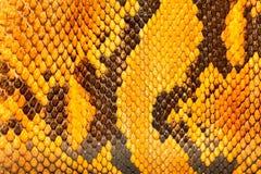黄色Python皮革,背景的皮肤纹理 免版税库存图片